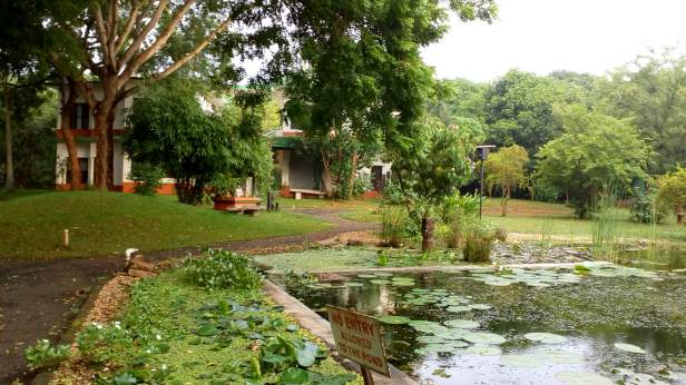 Pond @ Arka Guest House