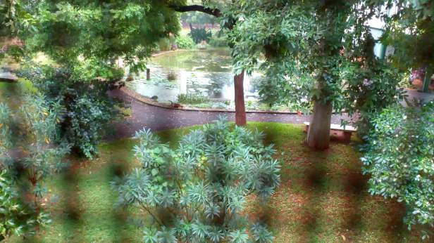 Pond view from our bedroom