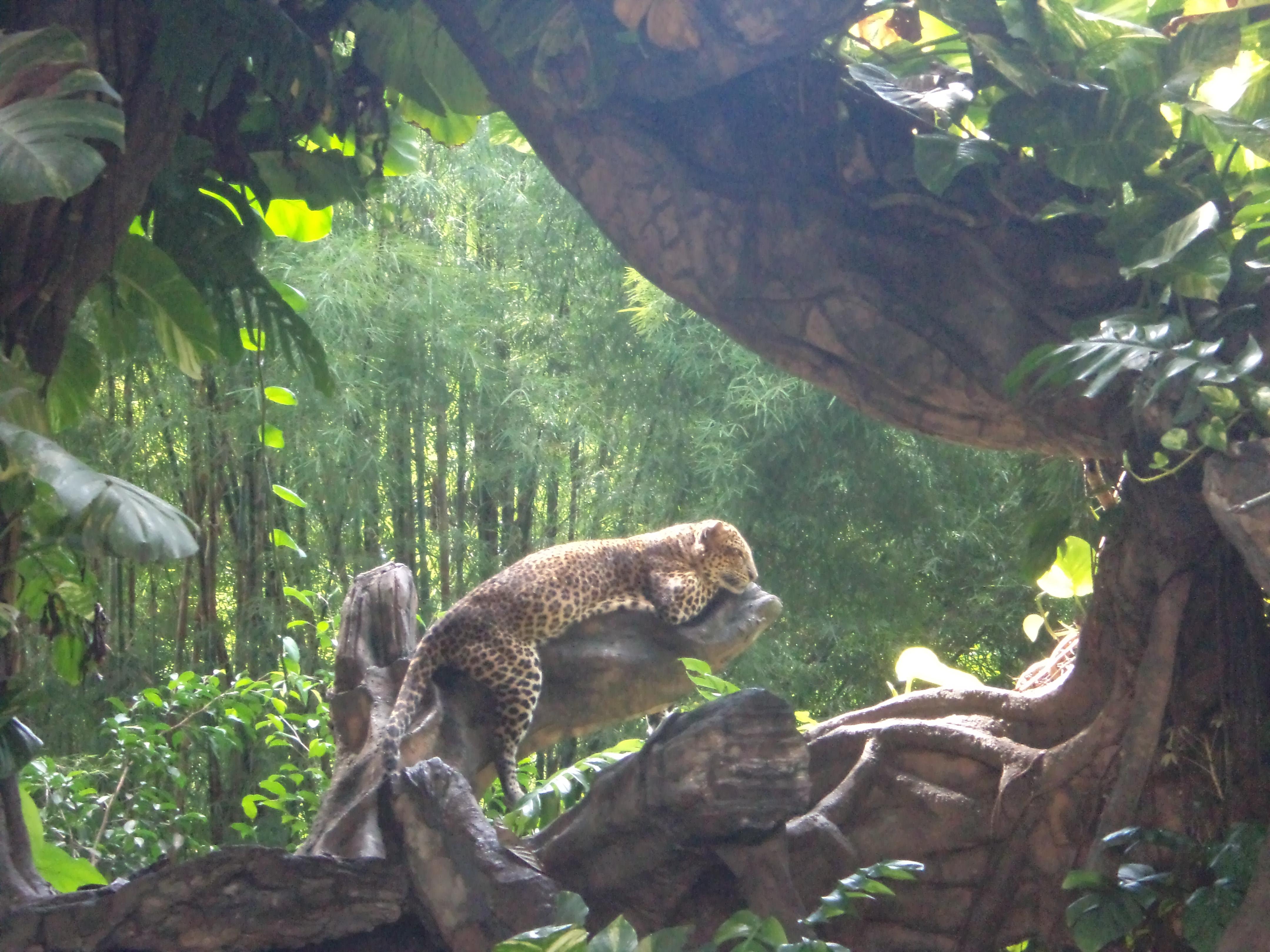 Leopard at Bali Marine and Safari Park