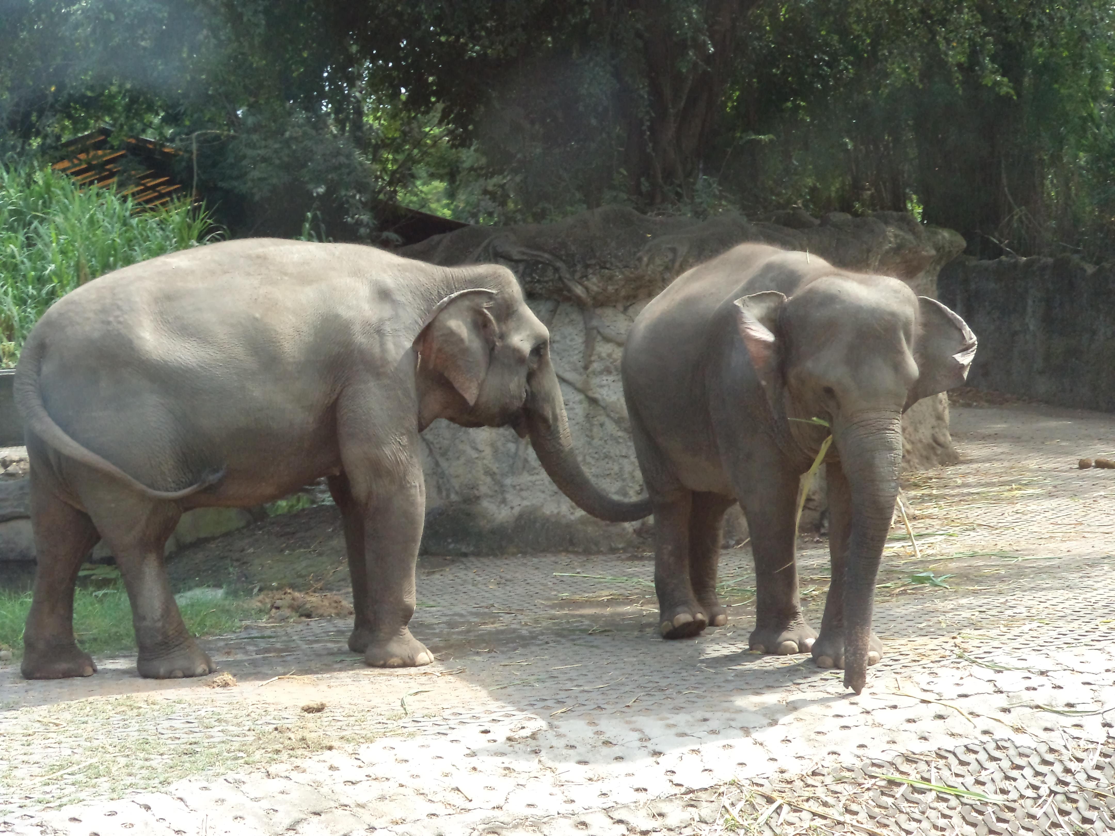 Elephants at Bali Marine and Safari Park