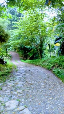 Access road to Pugmarks Jungle Lodge, Wayanad