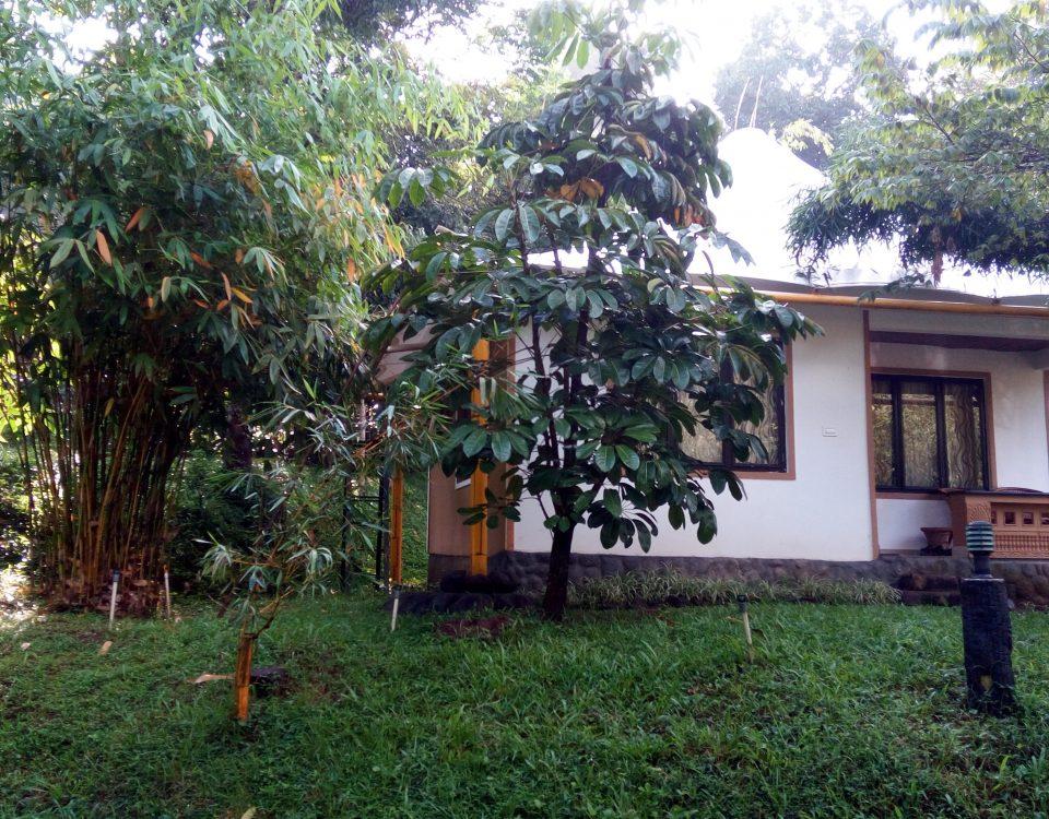 Pugmarks Jungle Lodge, Wayanad