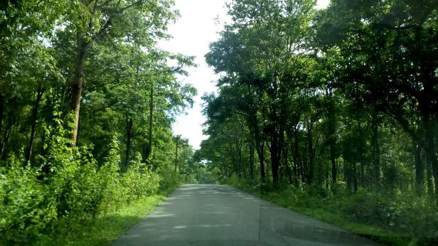 Drive from Bangalore to Wayanad