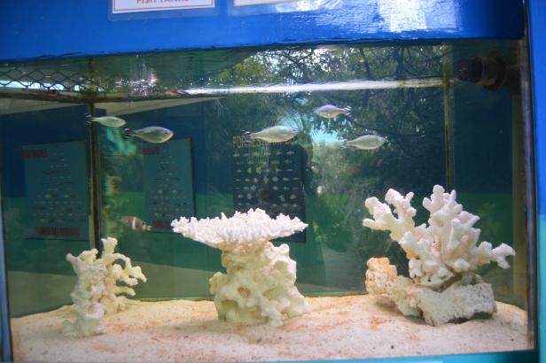 Fishes at Mauritius Aquarium